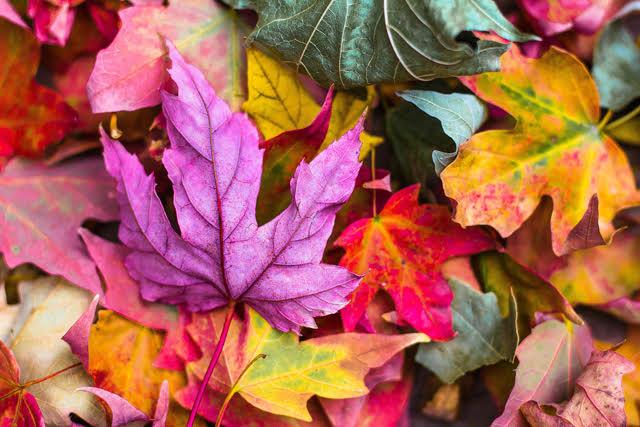 Le foglie cadono e i mercati si muovono